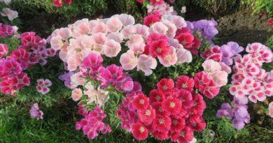 květiny sucho