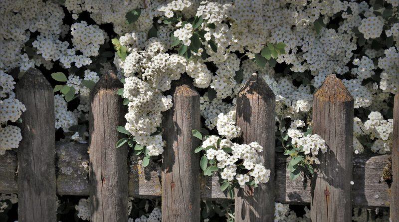 Vyberte vhodný plot pre vašu záhradu